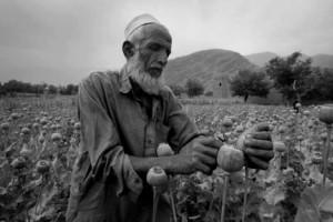 afghan-opium1jpg-16dbaf4e4fa7fdda_large